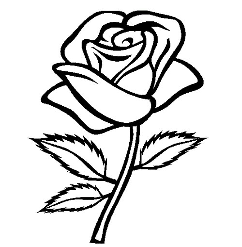 Line Drawing Rose Flower : Colorings rose flower drawing for kids